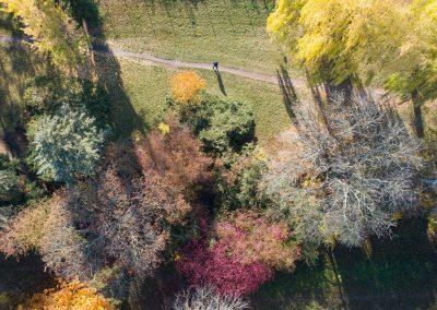 Herbstfarben im Volkspark Räcknitz, Dresden 11/2019
