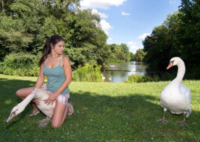 Schwäneberingung im Großen Garten, Saskia Keller von der Wildvogelauffangstation, Sächsische Zeitung 8/2016