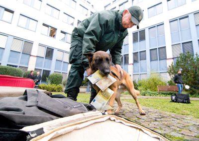 Tag der offenen Tür beim Zoll, Zollhundevorführung, Hauptzollamt Dresden, Sächsische Zeitung  10/2016